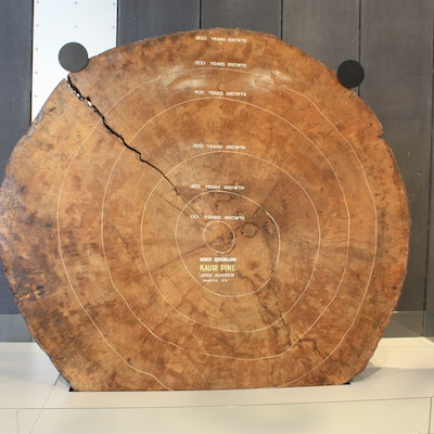 Queensland kauri log, Victoria museum
