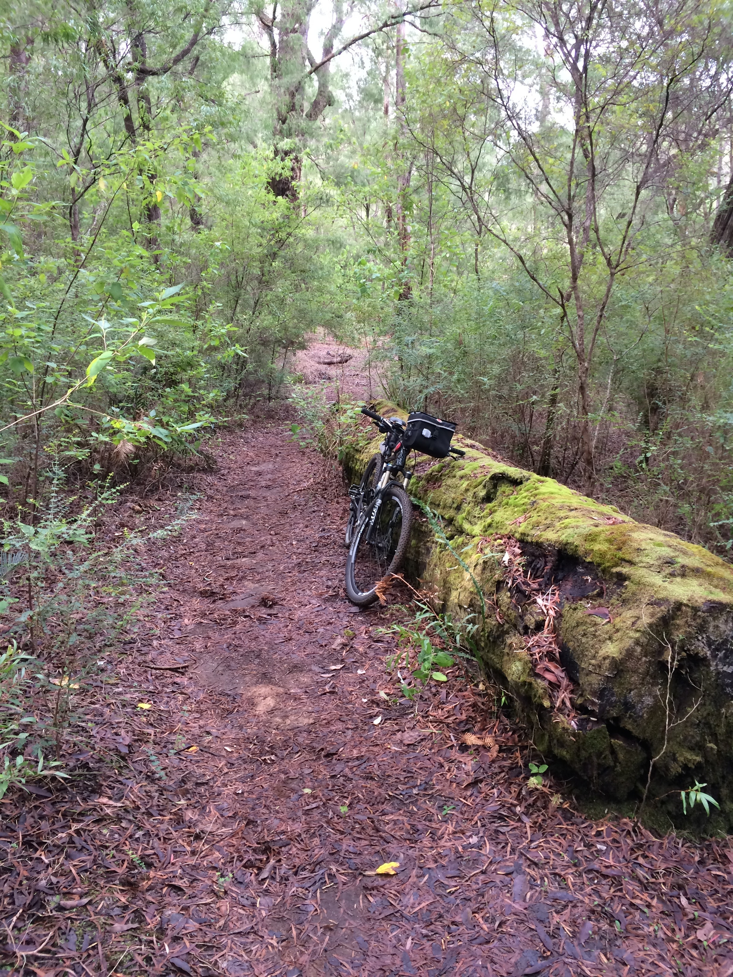 Trail next to Collie River