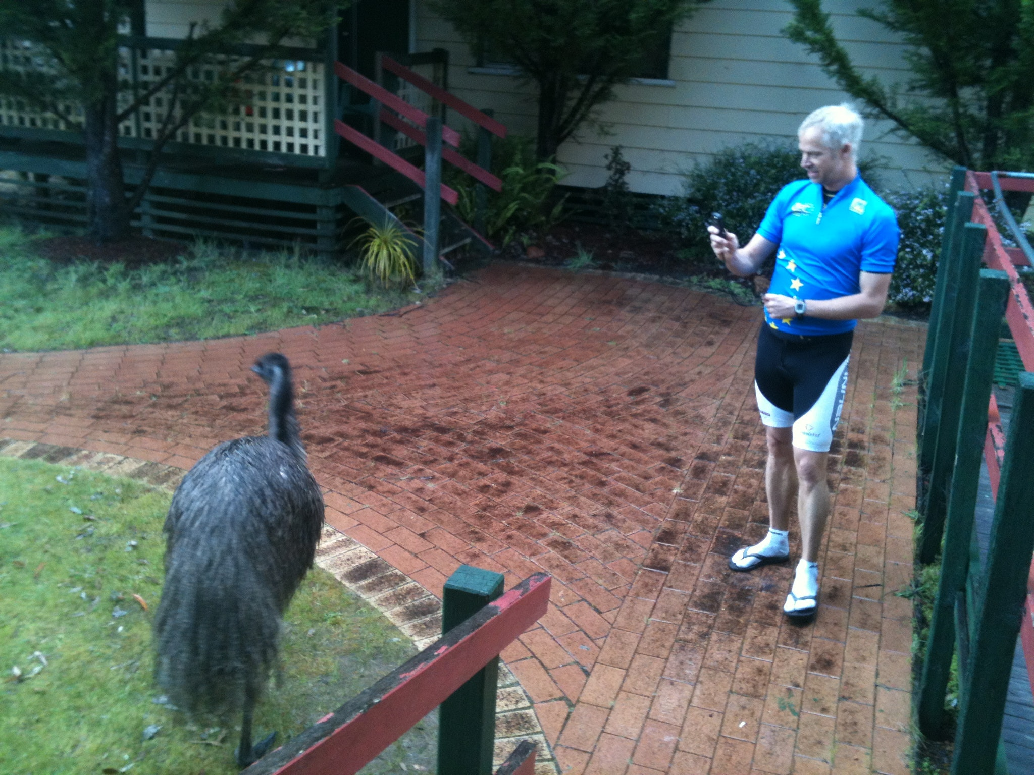 Emu and Cyclist, Quinninup