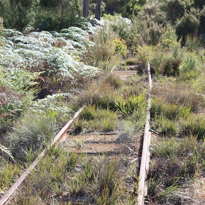 Disused railway line near Northcliffe