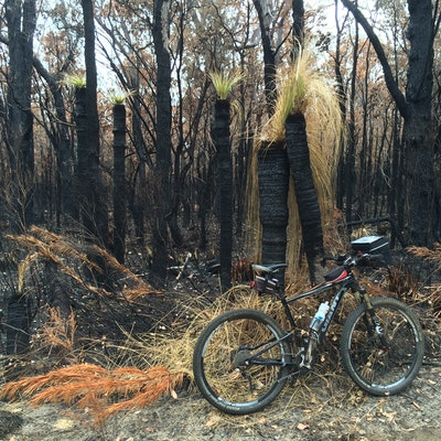 Burnt grass trees, map 8