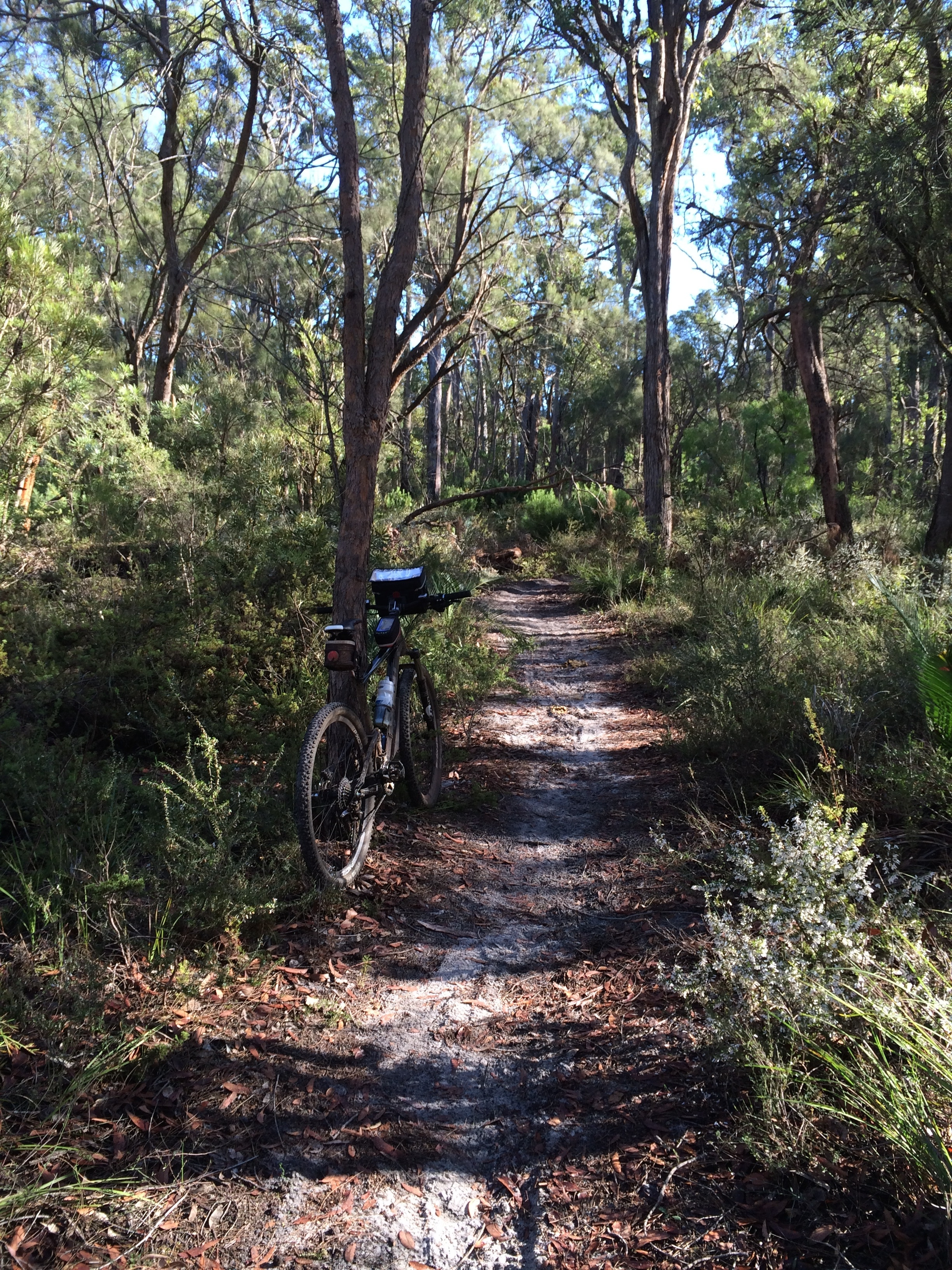 Old Timberline Trail  near Nannup