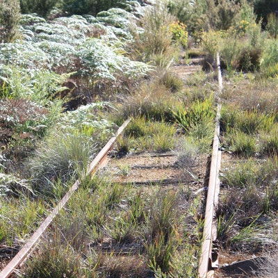 Disused railway near Northcliffe