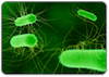 thumbnail_e_coli_resources.png