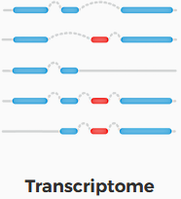1transcriptome.png