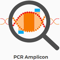 pcr.png
