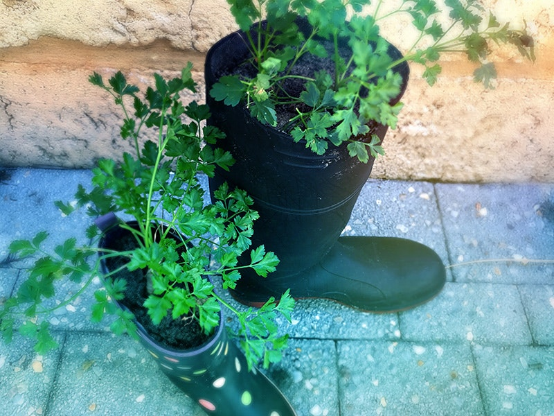 boots-parsley-landscape-800.jpg