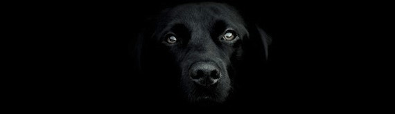 The Black Dog of depression